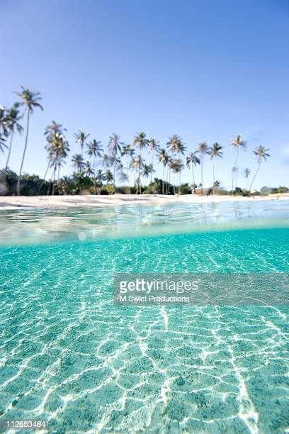 over-under-palm-trees - tahiti stock pictures, royalty-free photos & images