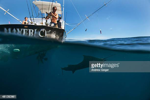 over/underwater shot of man with sailfish. - sailfish stock pictures, royalty-free photos & images