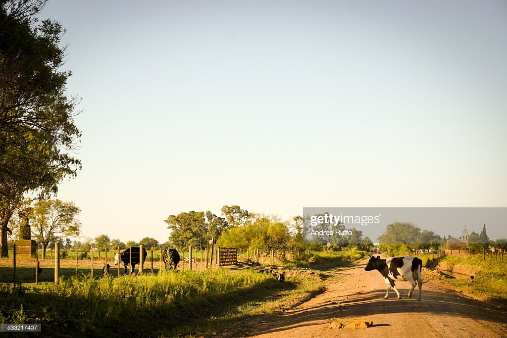 Overview Argentinas Farms : Stock Photo