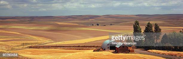 overview of grain fields with farm buildings - timothy hearsum stock-fotos und bilder