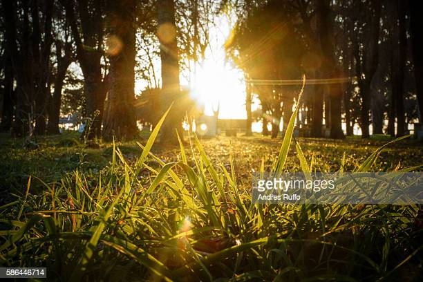 overview of lawn in front a sunset - andres ruffo stockfoto's en -beelden