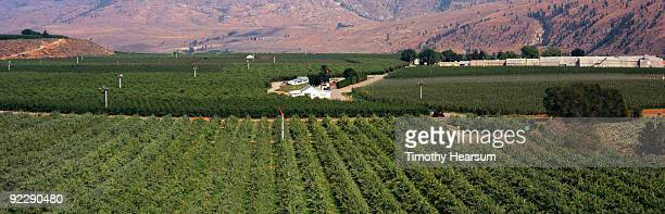 overview of orchards and processing facility - timothy hearsum stock pictures, royalty-free photos & images