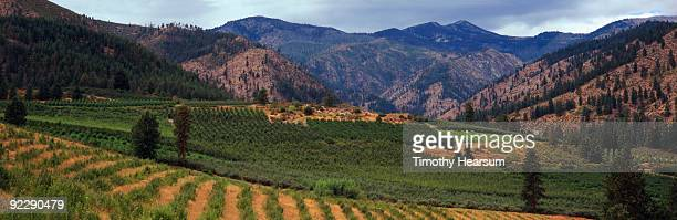 overview of orchards with mountains - timothy hearsum photos et images de collection