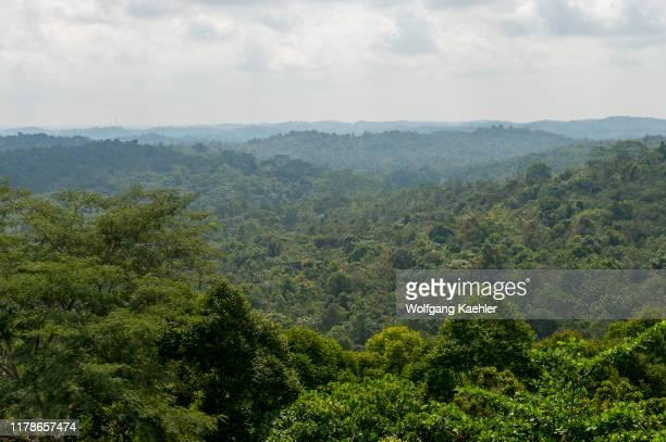 Overview of the regenerated rainforest at Samboja near Balikpapan, on Kalimantan, Indonesia.
