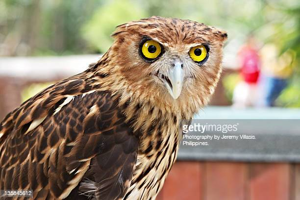 owl at zoo - malabon stock pictures, royalty-free photos & images