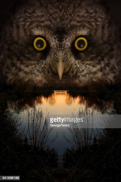 owl face and lake at sunset - great horned owl stock pictures, royalty-free photos & images