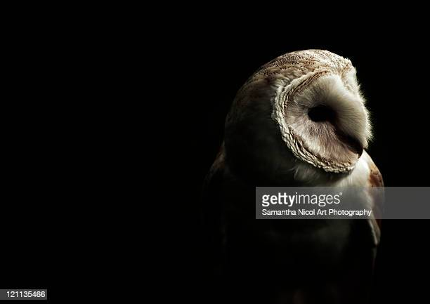 owl in dark - owl stock pictures, royalty-free photos & images