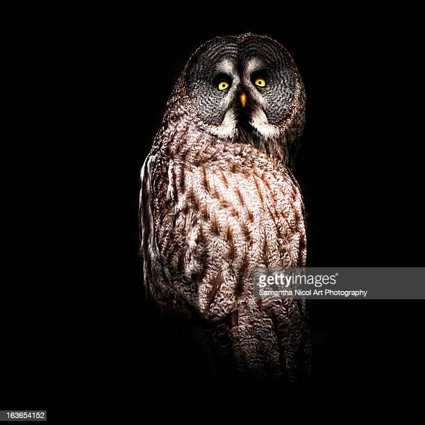 owl in the dark - owl stock pictures, royalty-free photos & images