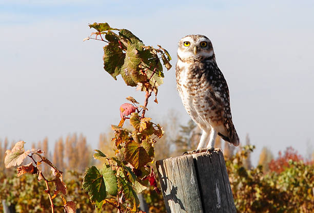 Owl Perching On Post Wall Art