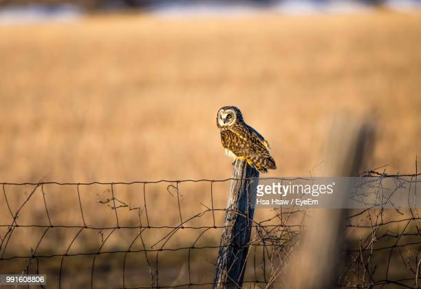 Owl Perching On Wooden Post During Sunset