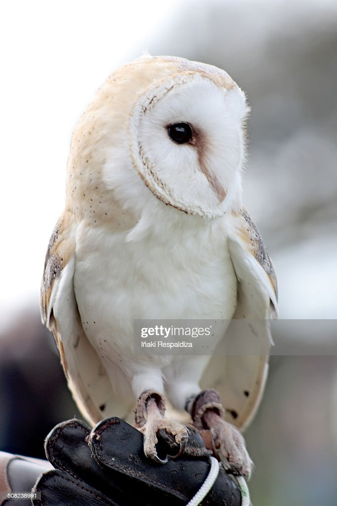 Owl! : Foto de stock