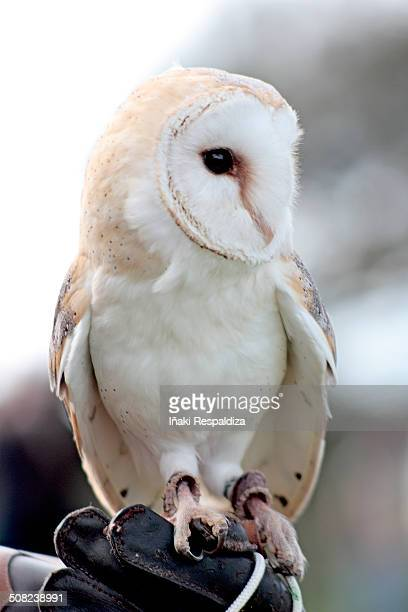 owl! - iñaki respaldiza stock pictures, royalty-free photos & images