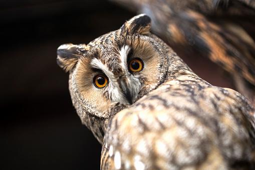 Owl 873848908