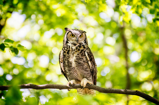 Owl Sitting in Forest 958016598