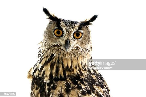 owl watching in camera - great horned owl stock pictures, royalty-free photos & images