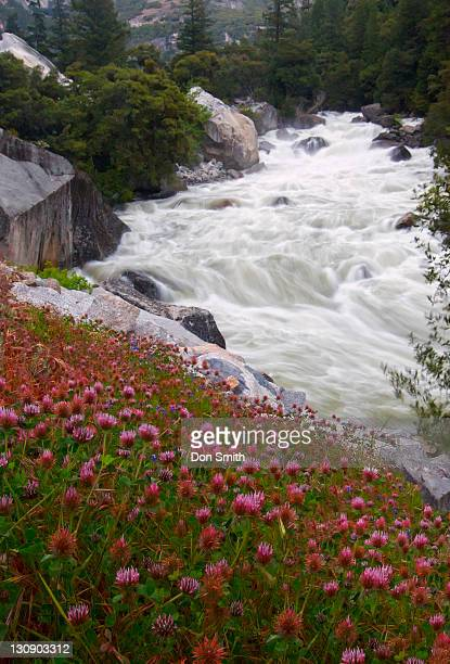 owl's clover and merced river - don smith stock pictures, royalty-free photos & images