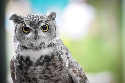 Owls Head 512148604