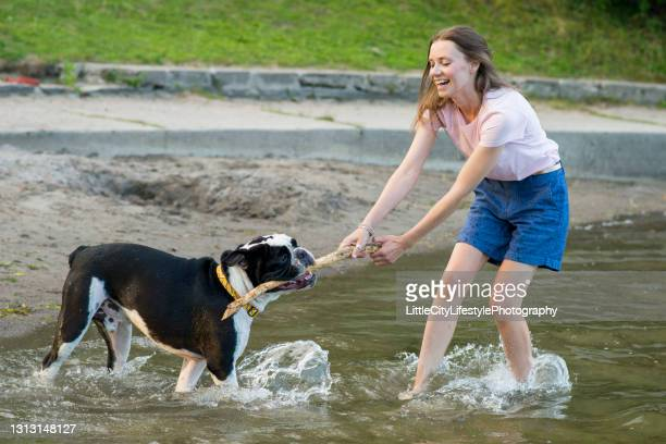 owner and dog playing with a stick - dogs tug of war stock pictures, royalty-free photos & images