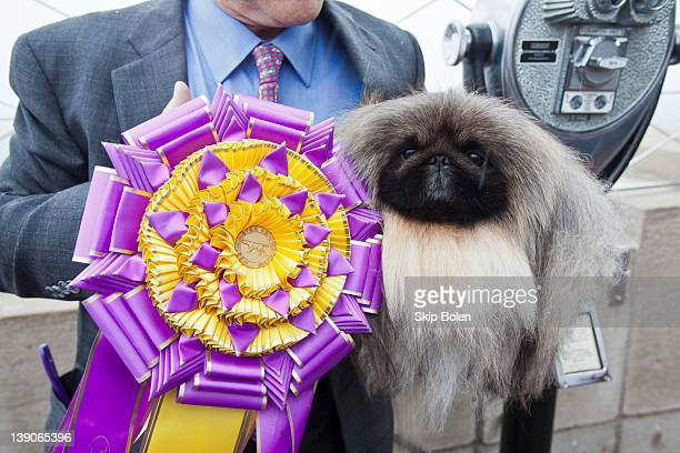 Owner and handler David Fitzpatrick with his Pekingese dog Malachy, winner of Best in Show at 136th Westminster Kennel Club show, visits The Empire...