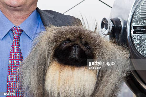 Owner and handler David Fitzpatrick with his Pekingese dog Malachy winner of Best in Show at 136th Westminster Kennel Club show visits The Empire...