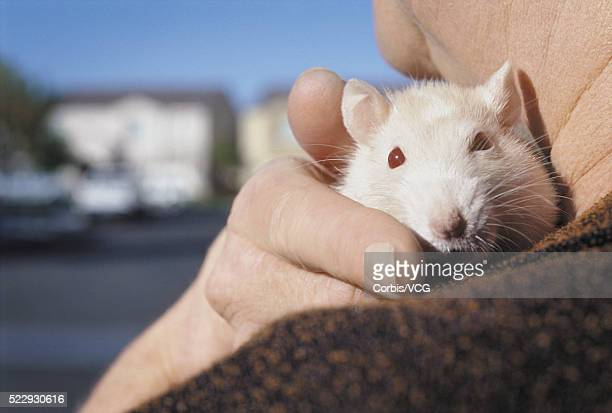 Owner Holding Pet Rat