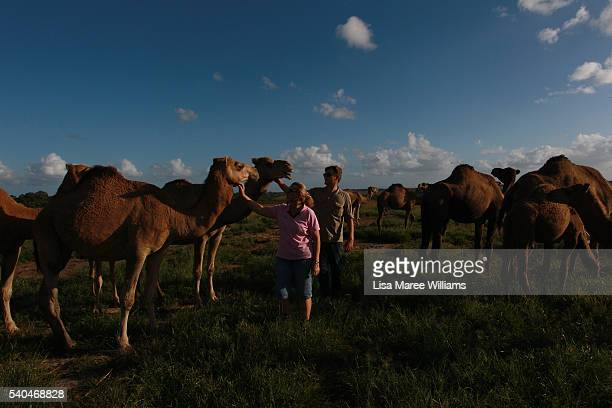 Owner Lauren Brisbane and dairy assistant Emerson Tasker welcome the camel herd prior to their afternoon feed on April 6 2016 in Sunshine Coast...