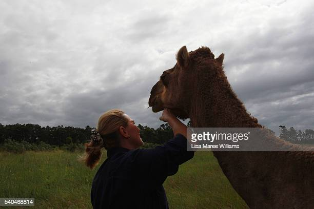 Owner Lauren Brisbane interacts with a pregnant camel at QCamel on April 5 2016 in Sunshine Coast Australia QCamel founded by Lauren Brisbane and her...