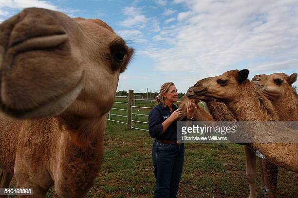 Owner Lauren Brisbane interacts with her herd of camels at QCamel dairy on April 5 2016 in Sunshine Coast Australia QCamel founded by Lauren Brisbane...