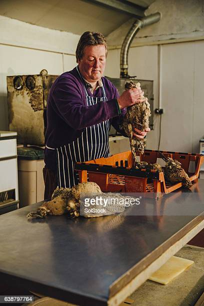 owner of smokehouse preparing pheasants - food contamination stock photos and pictures