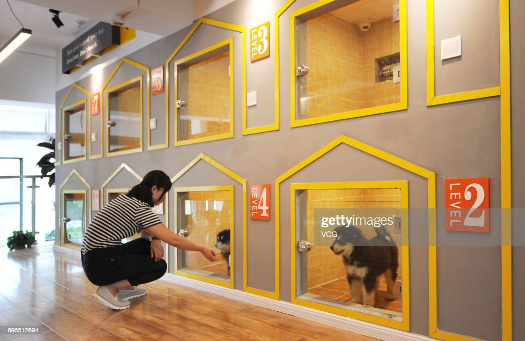 Owner of the dog hotel 'B.C Pet Hotel' Zhang Ling looks after a pet dog on June 15, 2017 in Qingdao, Shandong Province of China. Dog hotel owners Zhang Ling and Jiao Xuena like dogs and every time they need to ask their friends to take care of their dogs when they travel. So they came up with the idea of opening a hotel for pet dogs. 'B.C Pet Hotel', with a total area of 400 square metres, provides boarding, cleaning ,location tracking and other services for dogs.