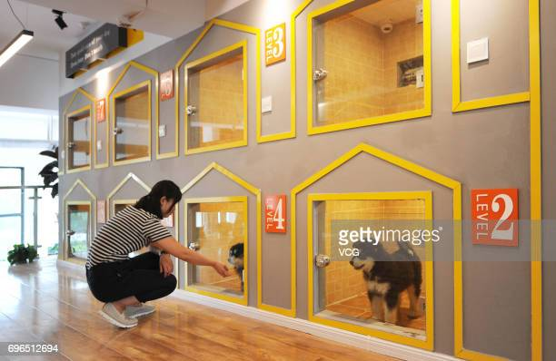 B c pet hotel stock photos and pictures getty images for Best hotels for pets