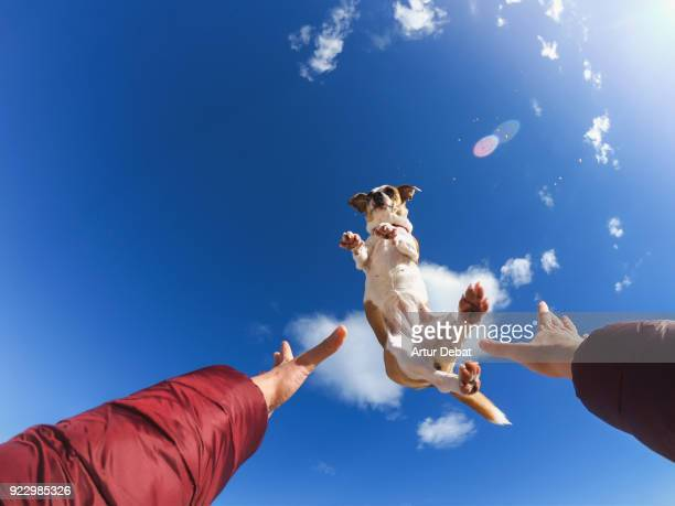owner playing with dog making him fly above the head. - blue film video stock-fotos und bilder