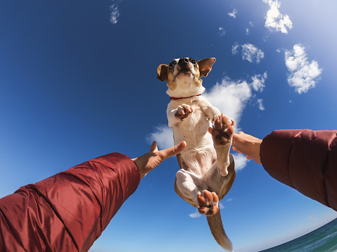Owner playing with dog making him fly above the head. - gettyimageskorea