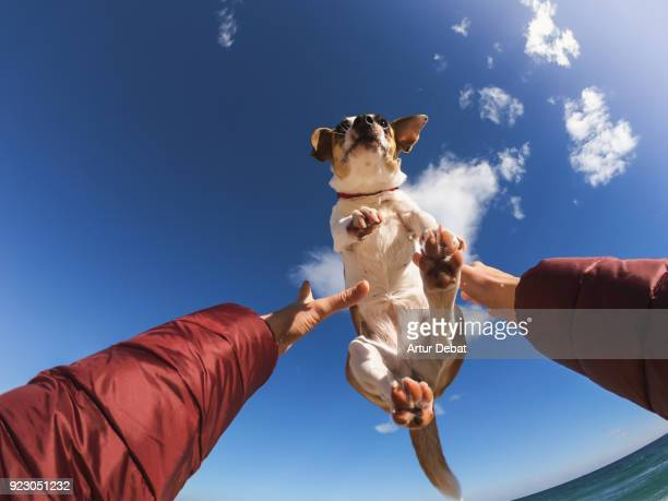 Owner playing with dog making him fly above the head.