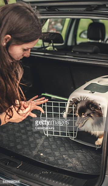 Owner transporting her dog in a car
