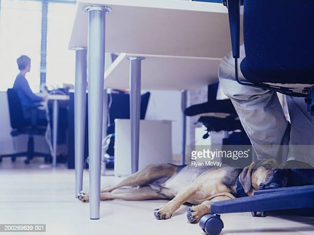Owner with dog sitting at office