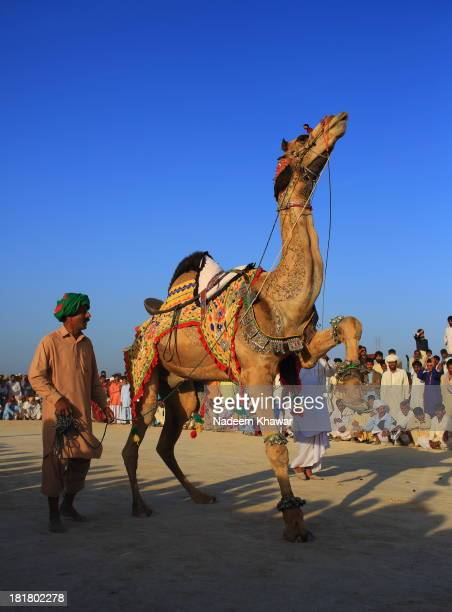 Owner with his Camel Camel is dancing with the beat of Drums at the festival in a village Cholistan called Chanan Peer