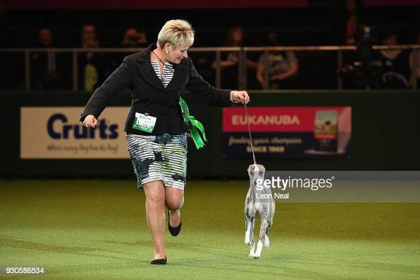 Owner Yvette Short and Tease the Whippet who has won Best In Show parade in the arena during day four of the Cruft's dog show at the NEC Arena on...