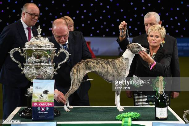 Owner Yvette Short holds Tease the Whippet who is being judged and goes on to win Best In Show on day four of the Cruft's dog show at the NEC Arena...
