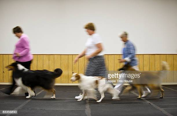 Owners and dogs walking, blurred motion
