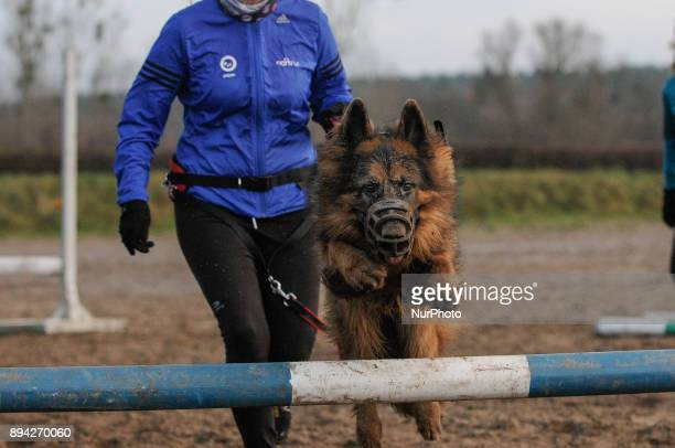 Owners and their dogs are seen jumping over a log fence in Bydgoszcz Poland on December 17 2017 A local group called HDR Wataha organizes activities...