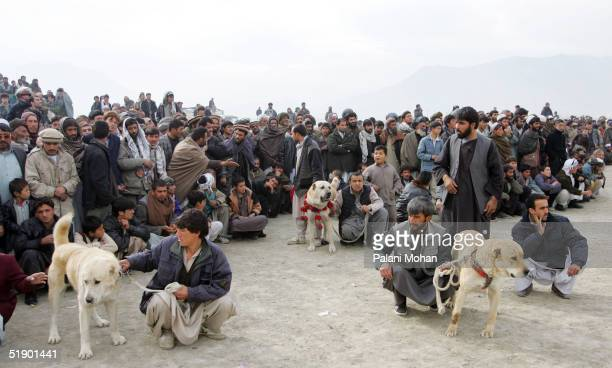 Owners and their fighting dogs gather in the early hour of the morning at a football field in a slum district of Kabul December 17 2004 in...