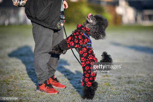 Owners arrive with their dogs for day 2 of the Cruft's dog show at the NEC Arena on March 6 2020 in Birmingham England The annual fourday show will...