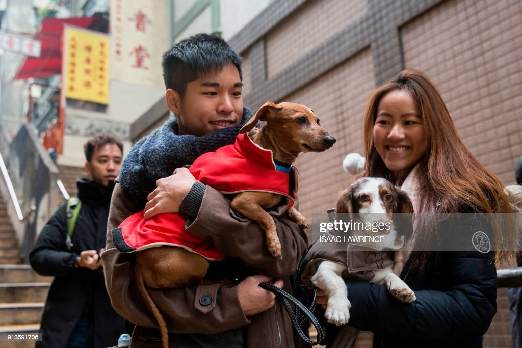Owners hold their dachshunds while taking part in the city's first 'Sausage Walk' in Hong Kong on February 3, 2018. In a city that likes to dress up its dogs, 50 dachshunds gathered in Hong Kong on February 3 wearing everything from patterned winter jumpers to dapper tweed. /