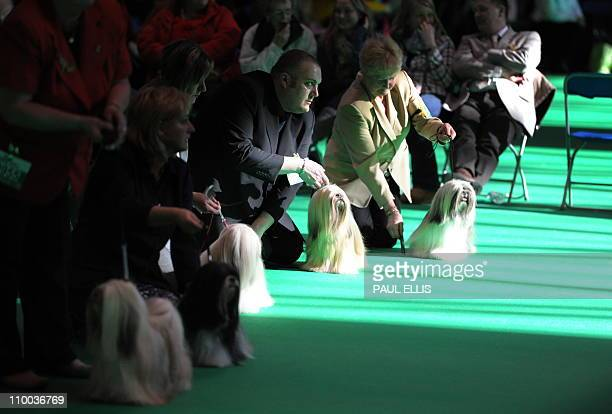 Owners hold their Lhasa Apso dogs during judging on the final day of the annual Crufts dog show at the National Exhibition Centre in Birmingham,...