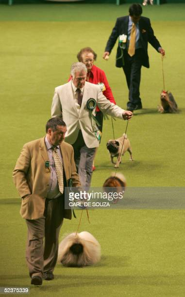 Owners parade their dogs for judges at Crufts, the Worlds biggest Dog show, held annually in Birmingham 11 March 2005. AFP PHOTO/CARL DE SOUZA