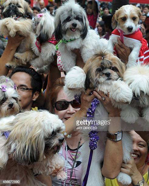 Owners raise their pets for a blessing from the Roman Catholic church to celebrate World Animal Day in Manila on October 5 2014 The day began in...