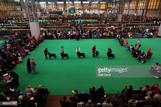 Owners show their dogs on the second day of Crufts dog show at the National Exhibition Centre on March 6 2015 in Birmingham England First held in...