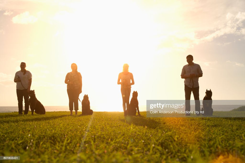 Owners training dogs in field : Stock Photo