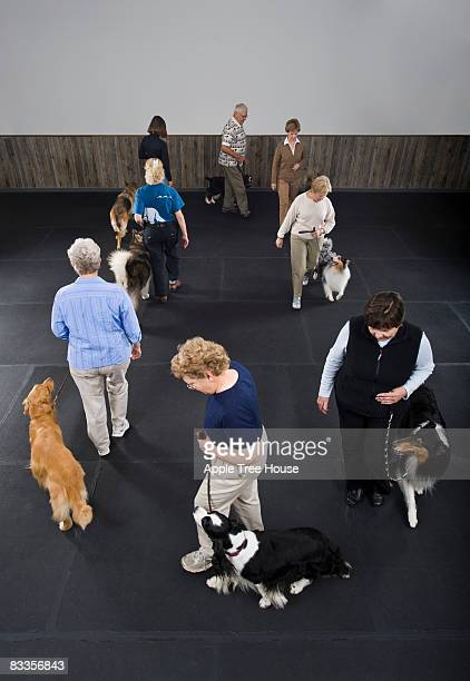 Owners walking dogs in obedience class